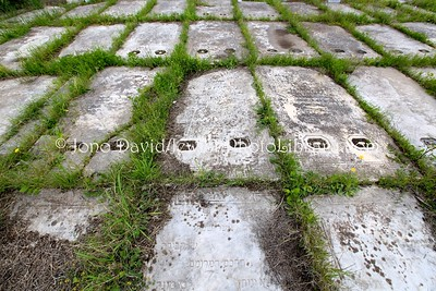 TN 360  Jewish Cemetery Borgel  Tunis, Tunisia