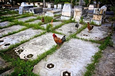 TN 354  Jewish Cemetery Borgel  Tunis, Tunisia